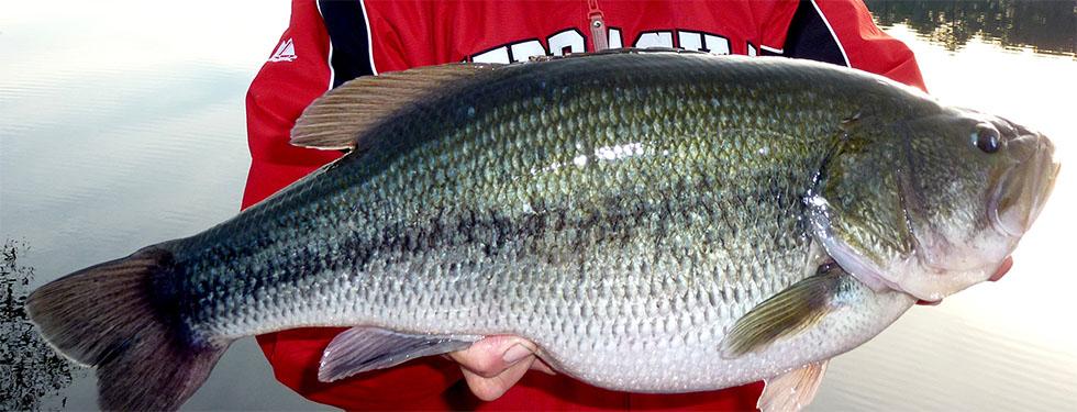 fishslide1