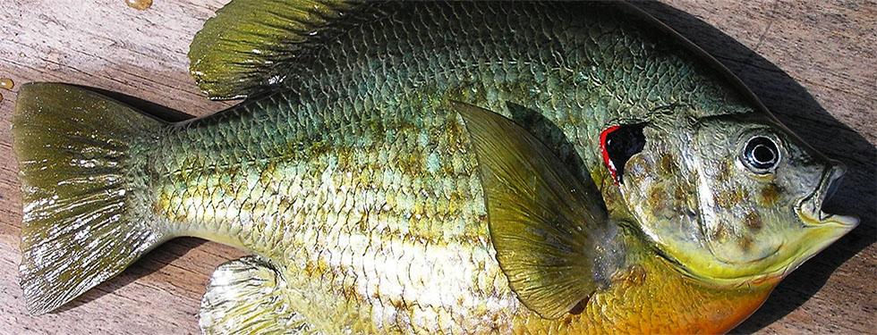 fishslide2